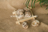 Organic Vegetable Dried Tea Flower Mushrooms with Factory Price