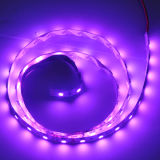 UV LED light 3528 (60leds/m)