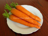 Fresh New Season Carrot From China