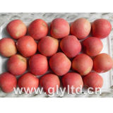 Good Quality Red Fresh FUJI Apple