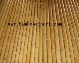 Moso Bamboo Fence