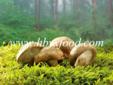 2-5cm Brown Dried Smooth Shiitake Mushroom Whole Price
