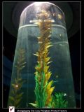 Giant Aquariums Acrylic Fish Tanks