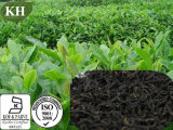 Factory Supply Natural Black Tea Extract Manufacturers (BTE98)