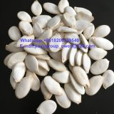 Confectionary Grade Health Food Top Quality Raw Pumpkin Seed