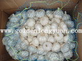 White Color Good Quality Pure White Garlic