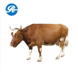 Feed Grade Vitamin B12 for Promote Animal Growth