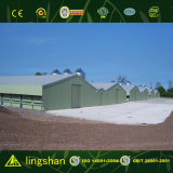 Cheap Stable Prefabricated Poultry House Chicken Farm