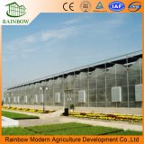 PC Sheet Greenhouse for Morden Agriculture Growing