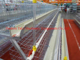 Chicken Cages (Tali- cage -01)