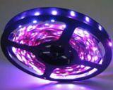 Flexible LED Strip Lighting SMD5050 30LED/M