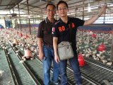 Unigrow Feed Additive for Chicken Breeding