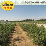 Medlar Organic Food Red Dried Gojiberry
