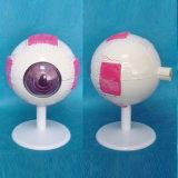 4 Times Human Eye Anatomy Model for Medical Teaching