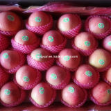 High Quality Carton Packing Chinese Fresh Qinguan Apple