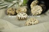 White Flower Mushroom Export to Southeast Asia