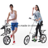Professional Manufacturer of Adult Bike and Kids Bike
