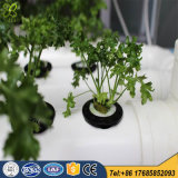 PVC Greenhouse Hydroponics Systems for Agriculture