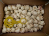 White Garlic China Origin Good Quality