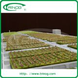 Float tray DFT hydroponics system for lettuce