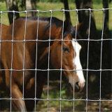 Hot Sale Galvanized Field Animal Cattle Fence