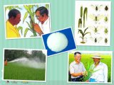 New Model Agrochemicals Insecticide Fenitrothion