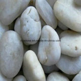 White Loose Pebble Decoration