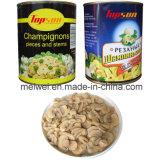 Canned Mushrooms, Cannedchampignon Mushroom Piece & Stems