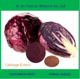 Best Selling Natural Organic Cabbage Extract Powder