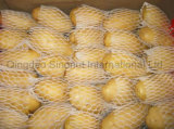 Fresh Potato with 150g&up, 200g&up, 300g&up
