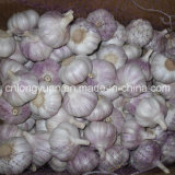 Chinese Fresh Normal White Garlic with Mesh Bag