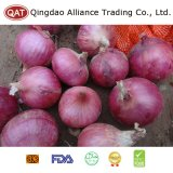 Fresh Chinese Purple Onion Wirh High Quality
