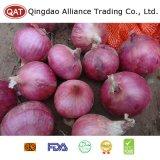 Fresh Chinese Purple Onion Wirh High Quality