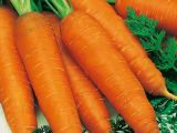 Orange Carrot with Good Price for Exporting