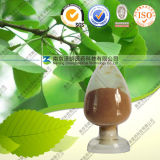 Natural Ginkgo Biloba Leaf Extract
