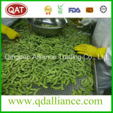 IQF Frozen Green Unshelled Soybean