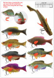 Noval Design Fishing Soft Lure