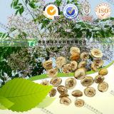 Manufacturer Supply Natural Herbal Drug Fructus Toosendan