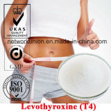 CAS 51-48-9 Steroids Powder Levothyroxine (L-Thyroxine/T4) for Fat Weight Loss