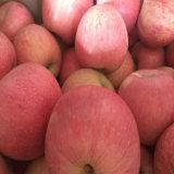 Good Quality of Fresh Red Qinguan Apple