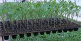 Plant Seedling Nursery Seed Tray