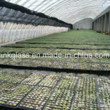 Agricultural New PE Shade Net with UV (YHZ-SDN14)