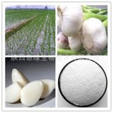 High Quality of Allicin Powder