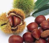 Fresh Chinese Chestnuts