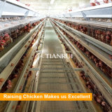 Tianrui hot DIP galvanized Full Automatic A Type Battery Chicken Cage System