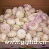 2017 New Crop Garlic Normal White Garlic