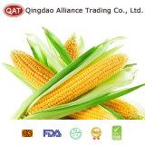 IQF Sweet Corn COB with Good Price