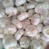 Good Quality of Fresh White Garlic From Jinxiang