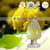 Natural 10: 1 Chrysanthemum Indicum Extract
