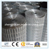 2016 Hot Dipped Galvanized Hardware Cloth / Galvanized Welded Wire Mesh